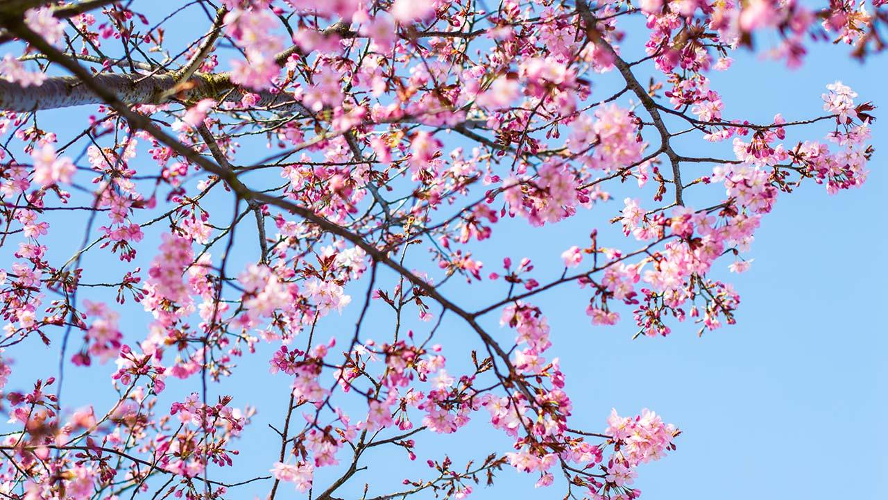 spring restaurant checklist